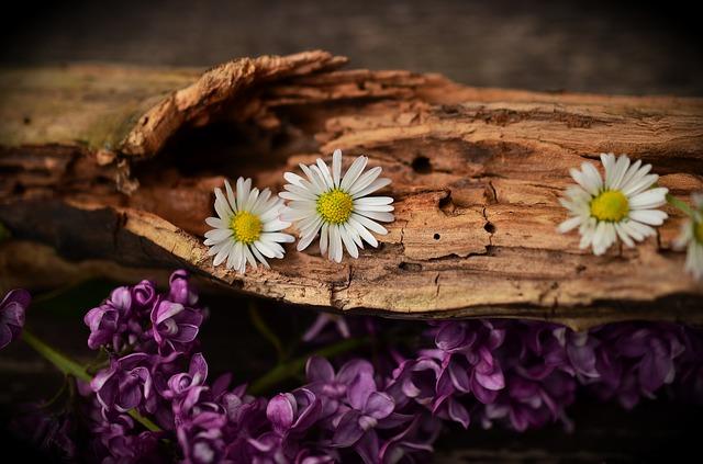 květiny u kmene