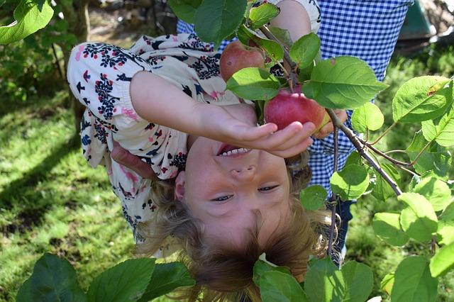 dítě na jabloni