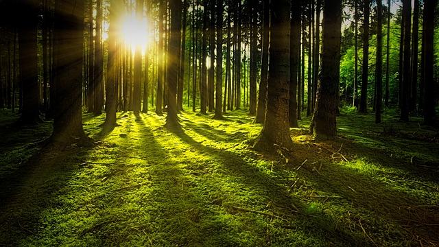 Lesy působí jako oáza klidu